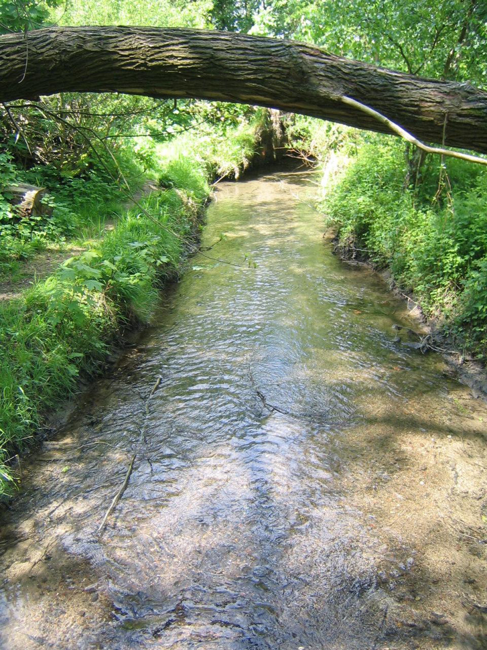 Reduzierter Durchfluss - Kiesbett sichtbar 2005